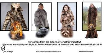 Fur and skin trade - Fur coats and animals