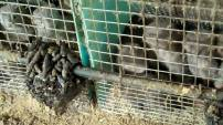 Fur and skin trade - Fur farms 01