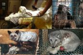 Fur and skin trade - Fur farms composite