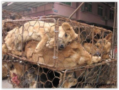 Fur and skin trade - Fur farms dogs 1