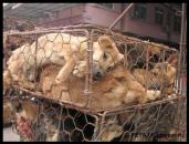 Fur and skin trade - Fur farms dogs 1