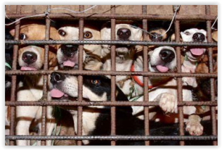 Fur and skin trade - Fur farms dogs 2