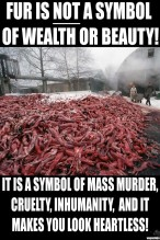 Fur and skin trade - Fur farms is not a symbol of wealth and beauty