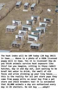 Fur and skin trade - Fur farms puppy mills