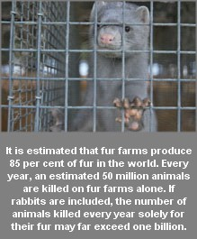 Fur and skin trade - Fur farms silver mink