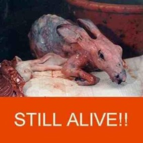 Fur and skin trade - Fur farms skinned but still alive