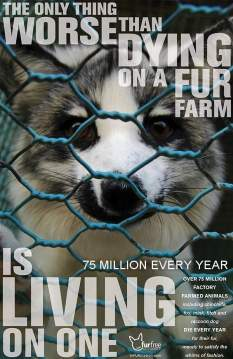 Fur and skin trade - Fur farms the only thing worse than dying on a fur farm
