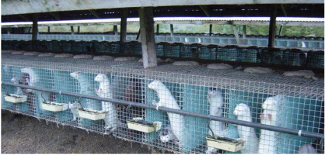 Fur and skin trade - Fur farms