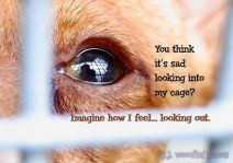 Fur and skin trade - Message - Pics looking in cage
