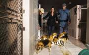 Laboratory testing - Beagles set free 1