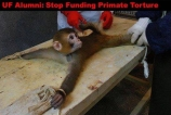 Laboratory testing - Monkey on table