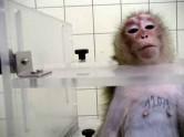 Laboratory testing - Monkeys 2