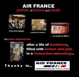Laboratory testing - Monkeys Air France