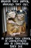 Laboratory testing - Monkeys alone they cry