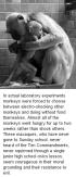 Laboratory testing - Monkeys rather starved