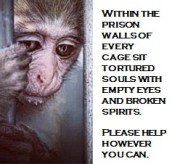 Laboratory testing - Within the prison walls of every cage sit tortured souls