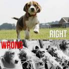 Laboratory testing - Wrong and right