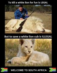 Lions - Killing is legal but saving illegal