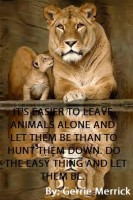 Lions - Leave them alone