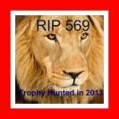 Lions - Logan's Run