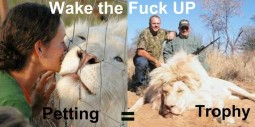 Lions - Petting is trophy hunting