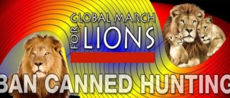 Lions - Poster for canned hunting 02