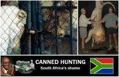Lions - Poster for canned hunting 03