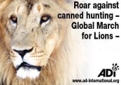 Lions - Poster for canned hunting 04
