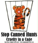 Lions - Poster for canned hunting 12