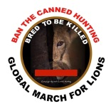 Lions - Poster for canned hunting 17