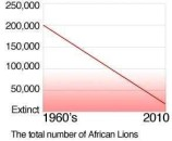 Lions - Stats decline in population