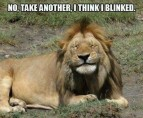 Lions - Take another I think I blinked