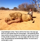 Lions - Trophy hunted by Donna Boddington