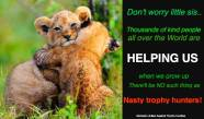 Lions - Trophy hunters no such thing