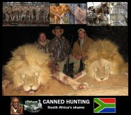 Lions - Trophy hunting 03