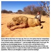 Lions - Trophy hunting 37