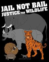 Message - Abusers bail not jail justice for wildlife