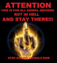 Message - Abusers finger flame stop kiling rot in hell