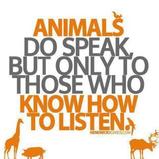 Message - Animals slience talk only to those who listen