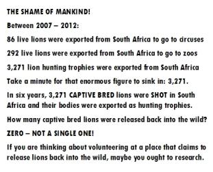 Trophy hunters - Lion stats
