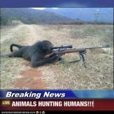 Trophy hunters - Revenge animals hunting humans