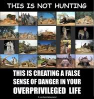 Trophy hunters - Revenge hunting not but false sense of danger