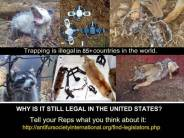 Trophy hunters - Traps Illegal in the US