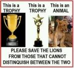 Trophy hunters - Trophy and lion difference 01