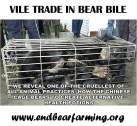 Wildlife - Bear bile 01