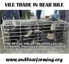Wildlife - Bear bile 01