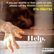 Wildlife - Report trade in animal parts