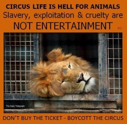 Zoo 00 Entertainment - Circus life is hell for animals