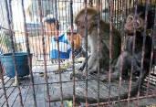 Zoo 02 Entertainment - Monkeys caged