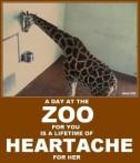 Zoo 08 Message - Zoo